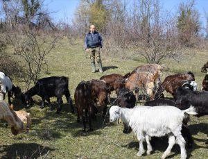 Almanya'daki kariyerini bırakıp köyüne dönen makine mühendisi keçi yetiştiricisi oldu