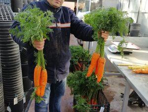 Pamukkale Üniversitesinde genetik saflaştırma yöntemiyle yerli brokoli ve havuç tohumu geliştirildi