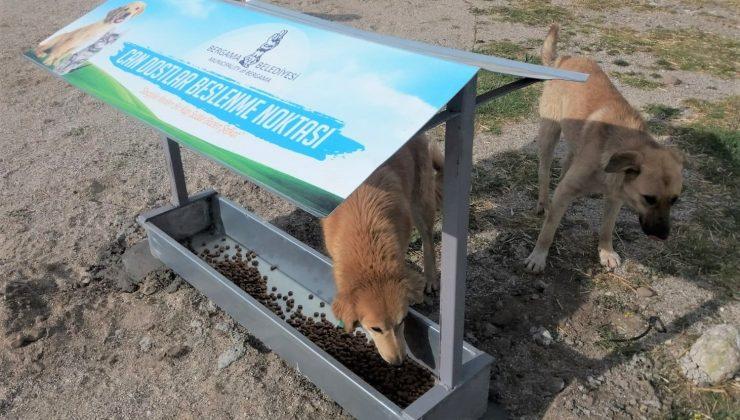 Bergama'da can dostlar için besleme noktaları kuruluyor