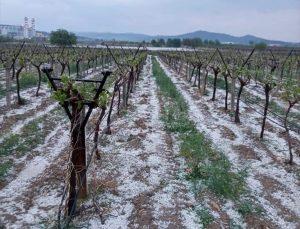 Denizli'de dolu yağışı tarım arazilerinde zarara neden oldu