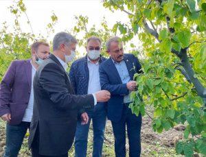 Denizli'de dolunun zarar verdiği tarım arazilerinde ön hasar tespit çalışmaları tamamlandı