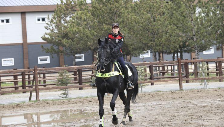 """Emniyetin """"asil ve yetenekli"""" atları titizlikle eğitilerek göreve hazırlanıyor"""