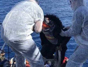 İzmir ve Aydın açıklarında Türk kara sularına itilen 64 sığınmacı kurtarıldı