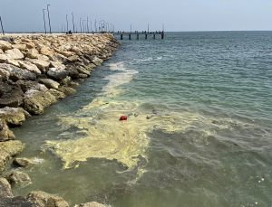 Mersin'de denizdeki renk değişiminin sebebinin Kıbrıs akasyası poleni olduğu açıklandı