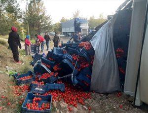 Muğla'da tarım işçileri devrilen kamyondaki domatesleri toplamak için seferber oldu