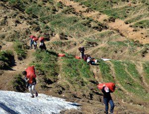 Muş'ta vatandaşlar, terörden temizlenen dağlarda pancar topladı
