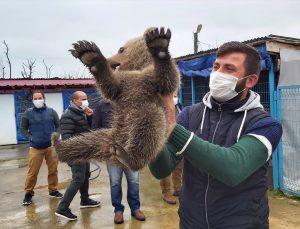 Sakarya'da eve giren ayı yavrusu koruma altına alındı