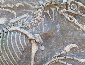 """Fosilleşmiş kemikleri 72 milyon yıl önceye dayanan dinozor, """"yeni bir tür"""" olarak kayıtlara geçti"""