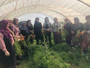AK Parti İzmir İl Kadın Kolları Başkanlığı'ndan kadın girişimcilere kooperatifçilik eğitimi