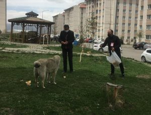 """Ardahan'da """"tam kapanma"""" uygulamasında sokak hayvanları unutulmadı"""