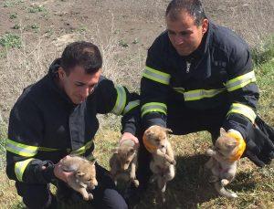 Burdur'da kuyuya düşen 4 tilki yavrusu itfaiye ekiplerince kurtarıldı