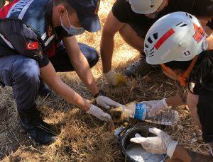 Datça'da kuyuya düşen iki yaban domuzu çıkarıldı