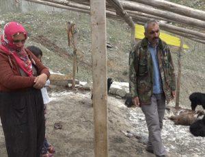Diyarbakır'da köpeklerin saldırdığı 20 keçi telef oldu