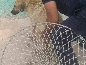Kahramanmaraş'ta sulama kanalına düşen köpeği itfaiye ekipleri kurtardı