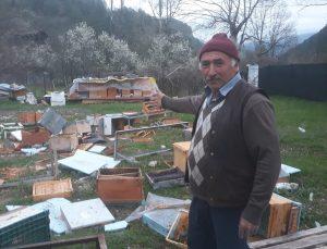 Karabük'te ayılar arı kovanlarını parçaladı
