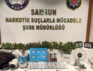 Samsun'da yasa dışı kenevir yetiştiriciliğine yönelik düzenlenen operasyonda 11 şüpheli yakalandı