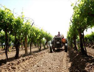 Sarıgöl'de çiftçiler tarla ve bahçelerde çalışmaya devam ediyor