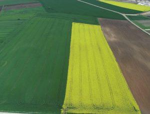 """Trakya'da """"Altın sarısı"""" kanola tarlaları buğdayın yeşiliyle buluştu"""