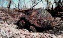 İstanbul ve Bazı İllerde Orman Yasağı! 1 Ay Sürecek