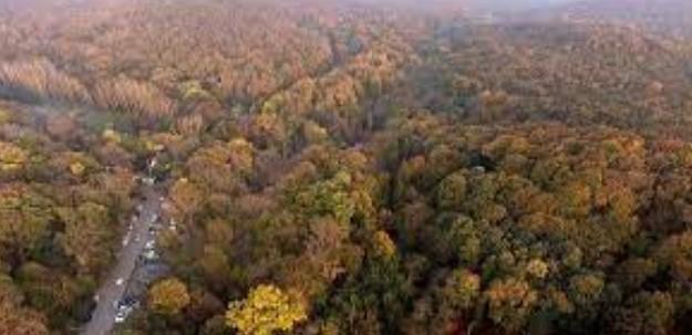 İstanbul'da Ormanlara Giriş Yasağı 30 Eylül'e Uzatıldı!